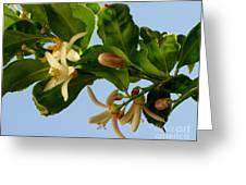 Luscious Lemon Promise Greeting Card