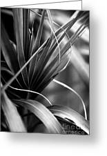 Luscious Lines Greeting Card