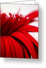 Luscious Red Flower Greeting Card