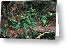 Lush Ferns Of The Forest Greeting Card