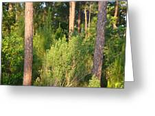 Lush Forest Greeting Card