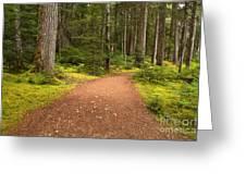 Lush Green Forest At Cheakamus Greeting Card