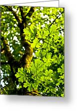 Lush Green Maple Greeting Card