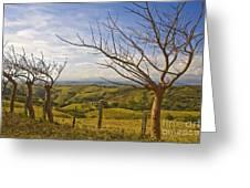 Lush Land Leafless Trees 2 Greeting Card