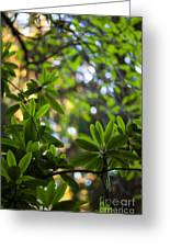 Lush Rhododendron Forest Greeting Card