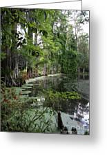 Lush Swamp Vegetation Greeting Card