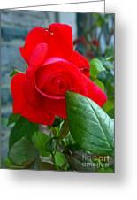Luss Rose Greeting Card