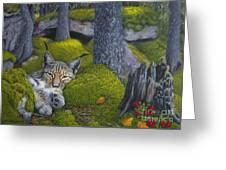 Lynx In The Sun Greeting Card