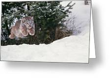 Lynx Leaping Greeting Card