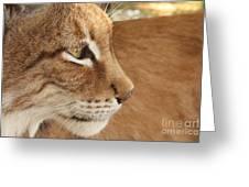 Lynx Profile Greeting Card