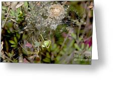 Lynx Spider And Young Greeting Card