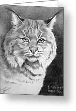 Lynx Greeting Card by Suzanne Schaefer