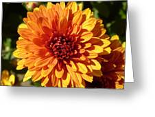 M Bright Orange Flowers Collection No. Bof3 Greeting Card