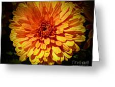 M Bright Orange Flowers Collection No. Bof8 Greeting Card by Monica C Stovall