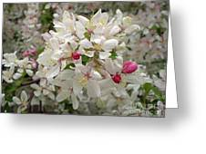 M White Flowers Collection No. W11 Greeting Card
