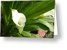 M White Flowers Collection No. W5 Greeting Card