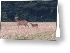 Mable The Female Deer With Harriet The Baby Fawn Greeting Card