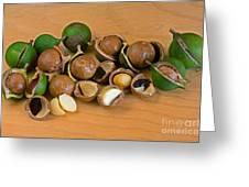 Macadamia Nuts Greeting Card