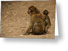 Macaque Monkeys Greeting Card