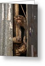 Macaque Peeking Out Greeting Card