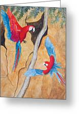 Macaw Claylick Greeting Card