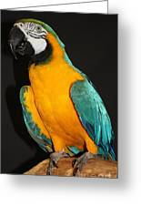 Macaw Hanging Out Greeting Card