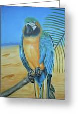 Macaw On A Limb Greeting Card