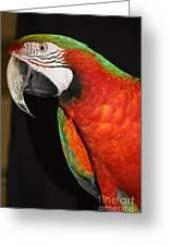 Macaw Profile Greeting Card by John Telfer