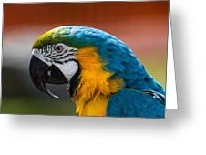 Macaw Tropical Bird Greeting Card