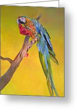 Macaw's Dream Greeting Card