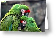 Macaws In Love Greeting Card