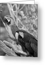Macaws Of Color B W 14 Greeting Card