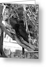 Macaws Of Color B W 15 Greeting Card
