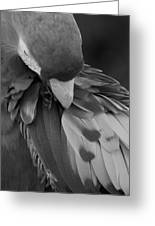 Macaws Of Color B W 16 Greeting Card