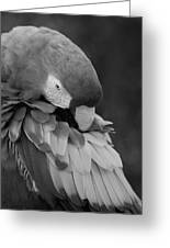 Macaws Of Color B W 17 Greeting Card