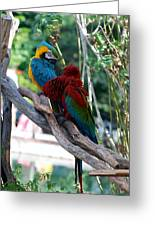 Macaws Of Color24 Greeting Card