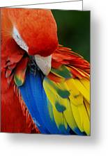 Macaws Of Color25 Greeting Card
