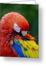 Macaws Of Color26 Greeting Card
