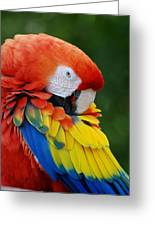 Macaws Of Color28 Greeting Card
