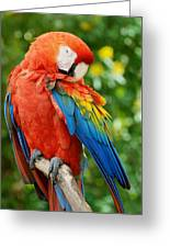 Macaws Of Color31 Greeting Card