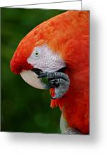 Macaws Of Color32 Greeting Card