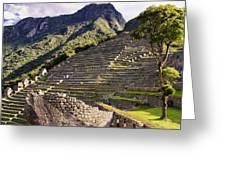 Macchu Picchu - Peru   Greeting Card