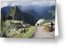 Machu Picchu And Llamas Greeting Card