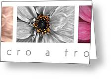 Macro A Trois Poster Greeting Card