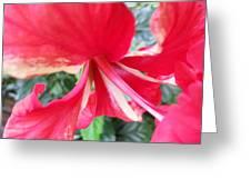 Macro Beauty Greeting Card
