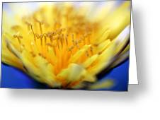 Macro Blur 2 Greeting Card