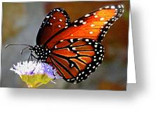 Macro Butterfly Greeting Card