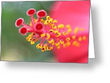 Macro Close Up Of Hibiscus Pollen  Greeting Card