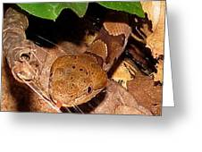 Macro Copperhead Greeting Card