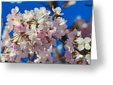 Macro Dc Cherry Blooms Greeting Card